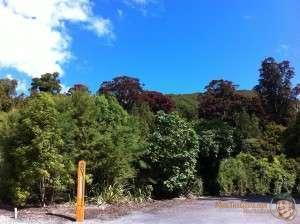 Kaitoke Regional Park, AKA Rivendell.